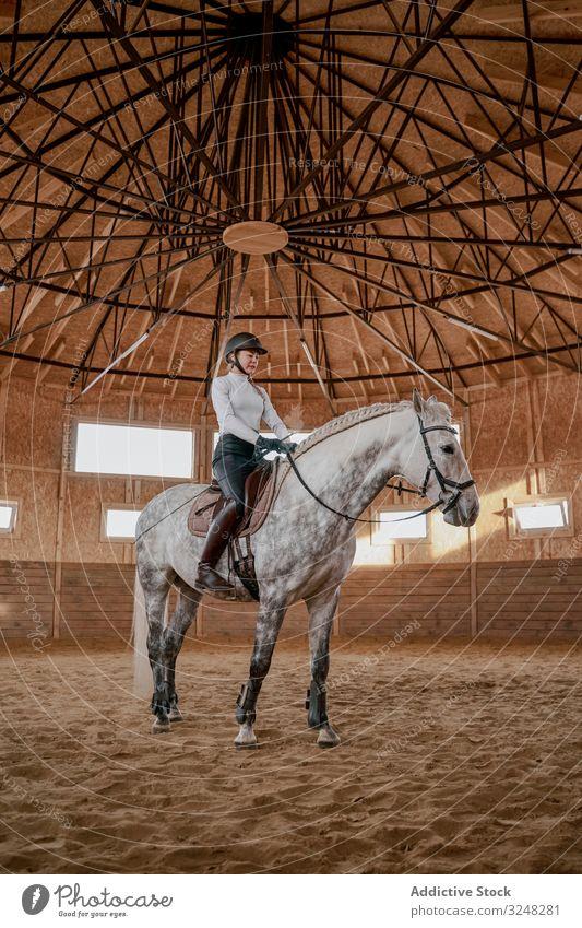 Reiter reitet buntes Schimmelpferd in der Reithalle Reiterin Pferd Hengst Haustier Tier Pflege Natur Sattel apfelgrau Arena Säugetier Zaumzeug Bauernhof