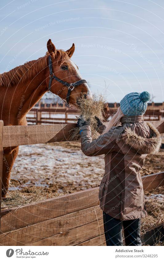 Warm gekleidete Frau füttert braunes Pferd mit Heu füttern Haustier Hengst Tier Pflege Natur Säugetier Stroh Zaumzeug Bauernhof Sattel Pferderücken Weide
