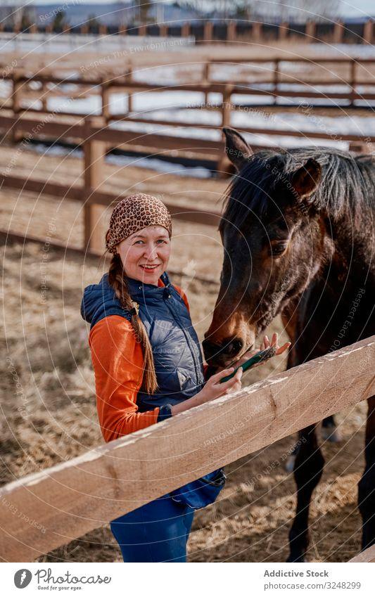 Arbeiter pflegt braunes Pferd im Offenstall Frau Gezeiten Streicheln Haustier Pferdezüchter Tier Pflege Natur Säugetier Uniform Stroh Zaumzeug Bauernhof Hengst