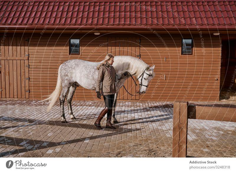 Warm gekleidete Frau mit grauem Pferd draußen Haustier Hengst Tier Pflege Natur Säugetier Stroh Bauernhof Sattel Pferderücken Weide Pferdestall Feld Zuneigung