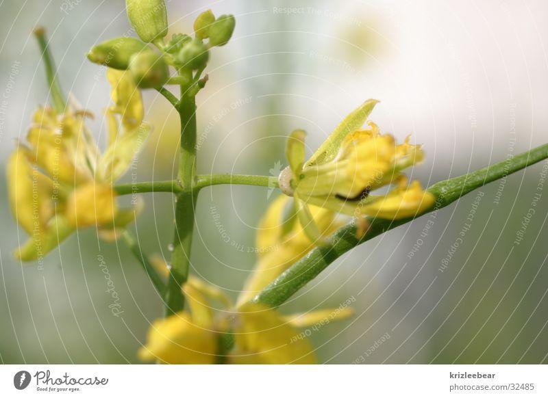 wo ist die made? Blume grün Pflanze gelb