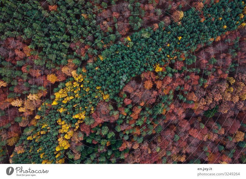 Waldwege Ferien & Urlaub & Reisen Umwelt Natur Landschaft Pflanze Herbst Klimawandel Erholung nachhaltig Umweltschutz Wachstum Wege & Pfade Farbfoto