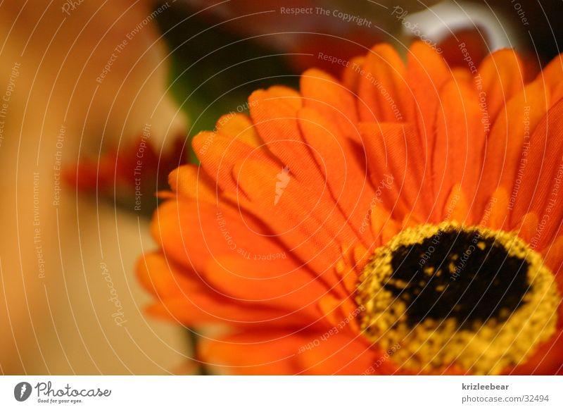 stoffblume Blume orange Stoff Statue falsch gestellt Ringelblume Stoffblüten