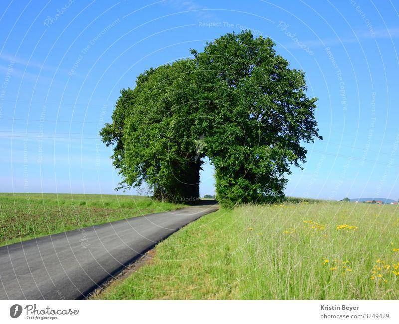 Straße ins Glück Freizeit & Hobby Ausflug Joggen wandern Natur Landschaft Himmel Sommer Schönes Wetter Baum Gras Wiese Zeichen Blühend entdecken Erholung