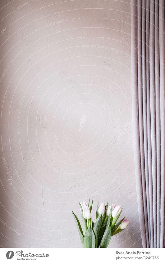 Wandfarbe - Rose Lifestyle Design Blume Tulpe Gardine rosa modern Häusliches Leben Wohndesign Innenarchitektur Putzfassade Zimmerpflanze Farbfoto