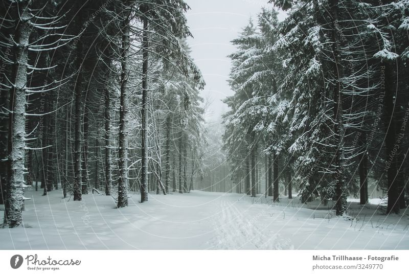 Lichtung im verschneiten Wald Ferien & Urlaub & Reisen Tourismus Winterurlaub Skifahren Natur Landschaft Himmel Sonnenlicht Nebel Eis Frost Schnee Pflanze Baum