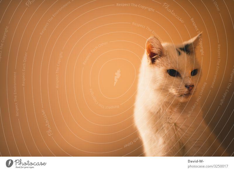 wohlbefinden Reichtum elegant Stil Design Häusliches Leben Wohnung Kunstwerk Gemälde Tier Haustier Katze Fell 1 beobachten weiß gold Wachsamkeit Blick ernst