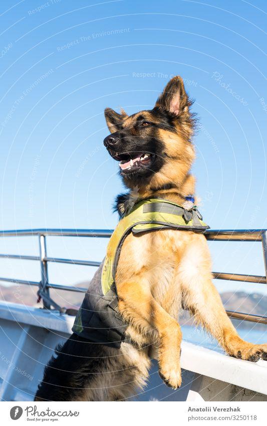 Natur Hund Tier Freude schwarz Erwachsene braun Freundschaft niedlich Schutz Zähne Haustier hören Säugetier Wachsamkeit Geborgenheit