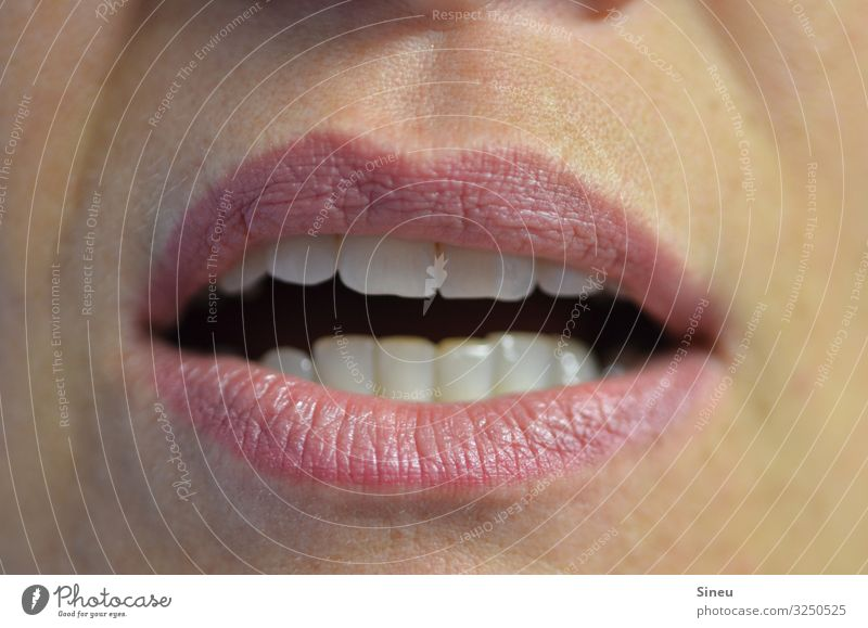 Talking Lips feminin Frau Erwachsene Mund Zähne 30-45 Jahre sprechen Essen Kommunizieren Küssen Konflikt & Streit Wut rosa verführerisch Zahnarzt Erotik