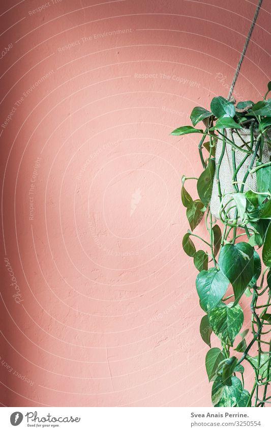 Wandfarbe - Lachs Pflanze Architektur Mauer orange rosa Häusliches Leben Design Wohnung trendy hängen Efeu Zimmerpflanze