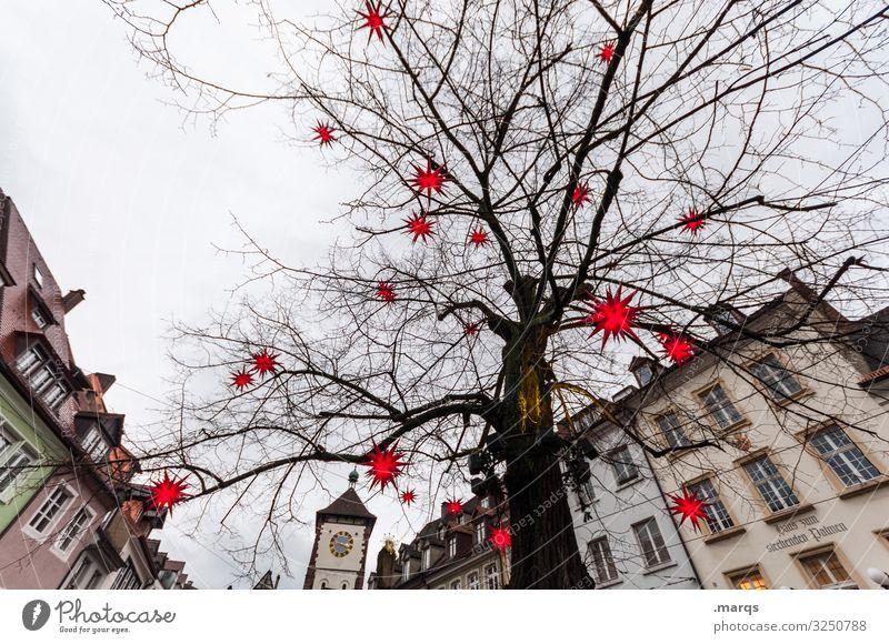 Stammhalter Weihnachten & Advent Himmel Winter Baum Linde Tor Freiburg im Breisgau Stadtzentrum Altstadt Haus Beleuchtung Stern (Symbol) leuchten Stimmung