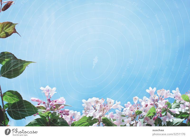 sehnsucht .. Sommer Frühling Sehnsucht Wärme Sonne Leben Außenaufnahme Natur Blume Blüte Blatt Wachstum Lebensfreude Himmel Blauer Himmel Rahmen gerahmt