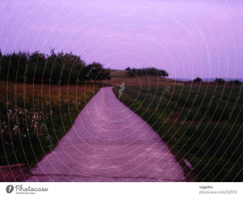 Weg in die Vergangenheit Himmel Wiese Wege & Pfade Feld