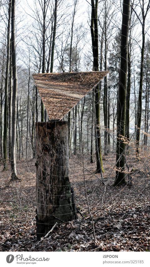Spiegel im Wald Umwelt Natur Herbst Baum Blatt Baumstumpf Moos festhalten ästhetisch eckig einfach elegant kalt braun grau Wege & Pfade Ast faulig Dreieck