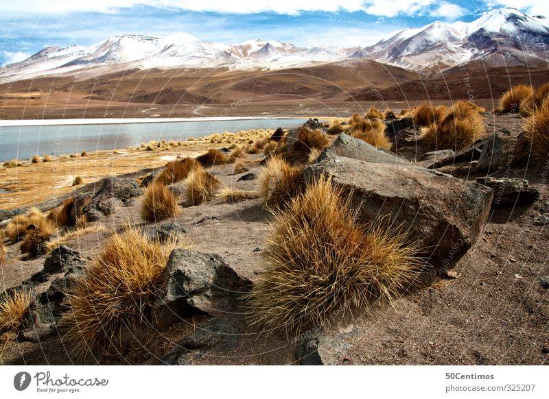 Mountain lake in the Andes in Bolivia with snow and try Plants Natur Ferien & Urlaub & Reisen Wasser Pflanze ruhig Landschaft Wolken Winter kalt Berge u. Gebirge Schnee Sand See Klima Schönes Wetter Südamerika