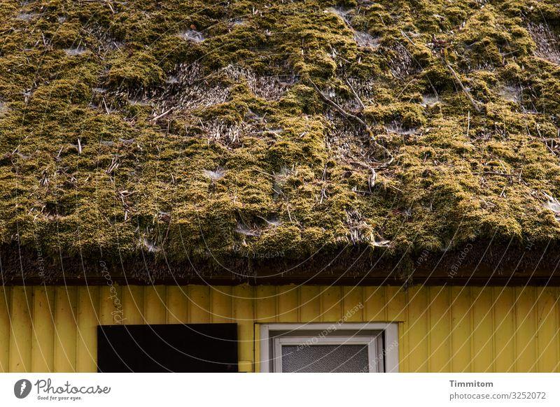 Fassade mit Dach Ferien & Urlaub & Reisen Umwelt Moos Dorf Haus Mauer Wand Sehenswürdigkeit Holz alt ästhetisch natürlich braun gelb schwarz weiß Gefühle
