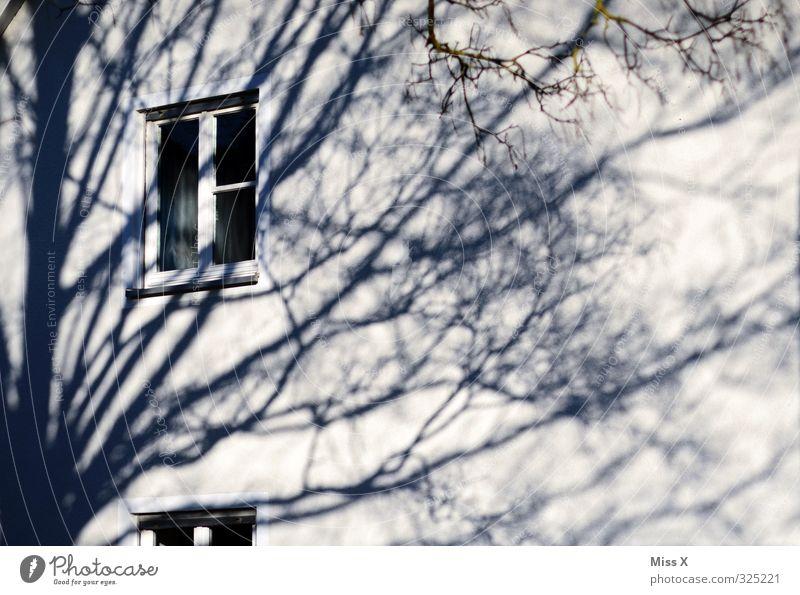 Fensterchen II Wohnung Baum Mauer Wand schwarz weiß Baumkrone Ast Zweig Schatten Schattenspiel Gedeckte Farben Außenaufnahme Licht