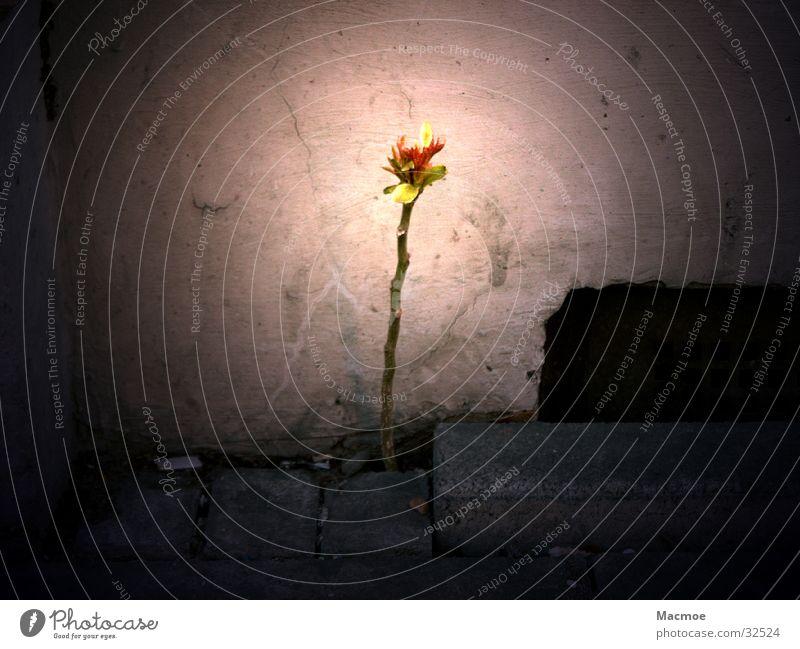 Einsame Pflanze Einsamkeit Licht Wand dunkel Keller Baum Bürgersteig