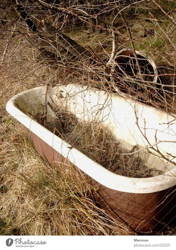 Badewanne Natur alt Baum Umwelt Häusliches Leben Müll Weide obskur Wasserstelle