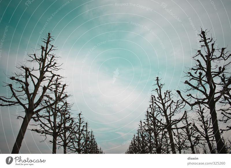 ¡ trash ! | \ / Umwelt Natur Pflanze Herbst Baum Park Allee Farbfoto Außenaufnahme Menschenleer Textfreiraum oben