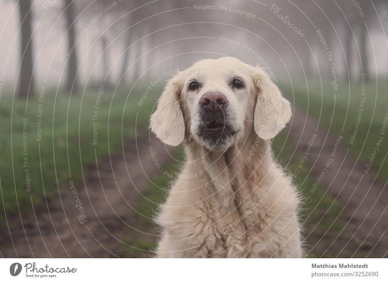 Ho, Ho, Ho! Hund schön grün weiß Tier Winter natürlich Wege & Pfade Glück grau Freundschaft Nebel Feld Wetter Kommunizieren sitzen