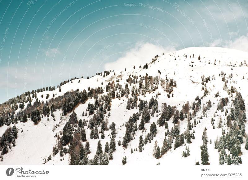 Hang zum Himmel Ferien & Urlaub & Reisen Winter Schnee Winterurlaub Berge u. Gebirge Umwelt Natur Landschaft Tier Urelemente Wolken Klima Schönes Wetter Baum
