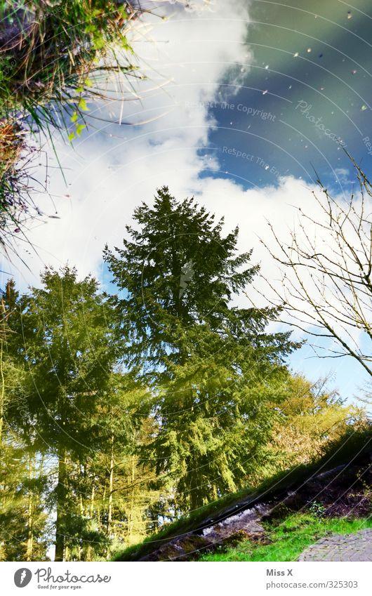 Spiegelbild Wasser Wetter Schönes Wetter Regen Baum See grün Pfütze Reflexion & Spiegelung Wald Tanne Küste Seeufer Farbfoto mehrfarbig Menschenleer Sonnenlicht