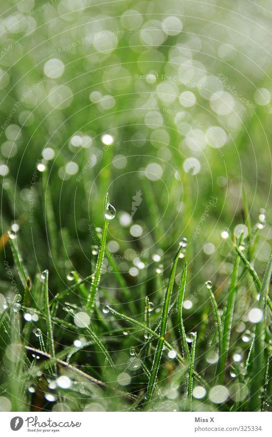 Tau auf meiner Wiese Wassertropfen Gras glänzend nass grün Punkt Farbfoto Außenaufnahme Nahaufnahme Muster Menschenleer Textfreiraum oben Morgen Morgendämmerung