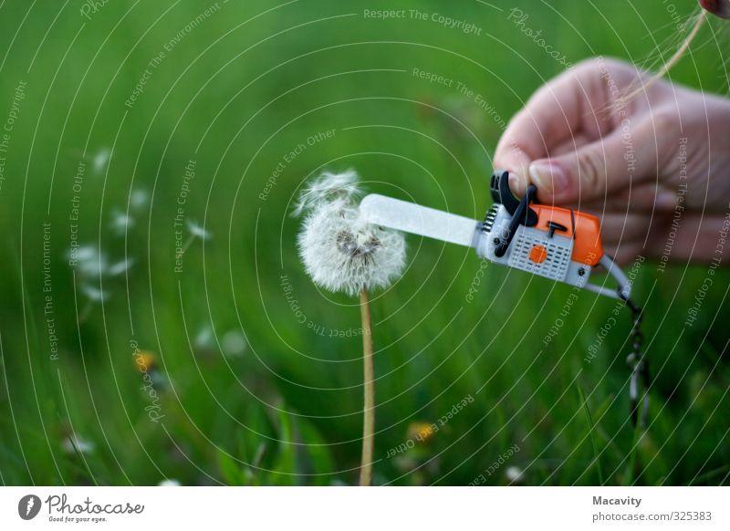 Abgeholzt Gartenarbeit Werkzeug Erneuerbare Energie Umwelt Natur Pflanze Erde Klimawandel Gras Blüte Wildpflanze Wiese Kettensäge Blühend verblüht natürlich
