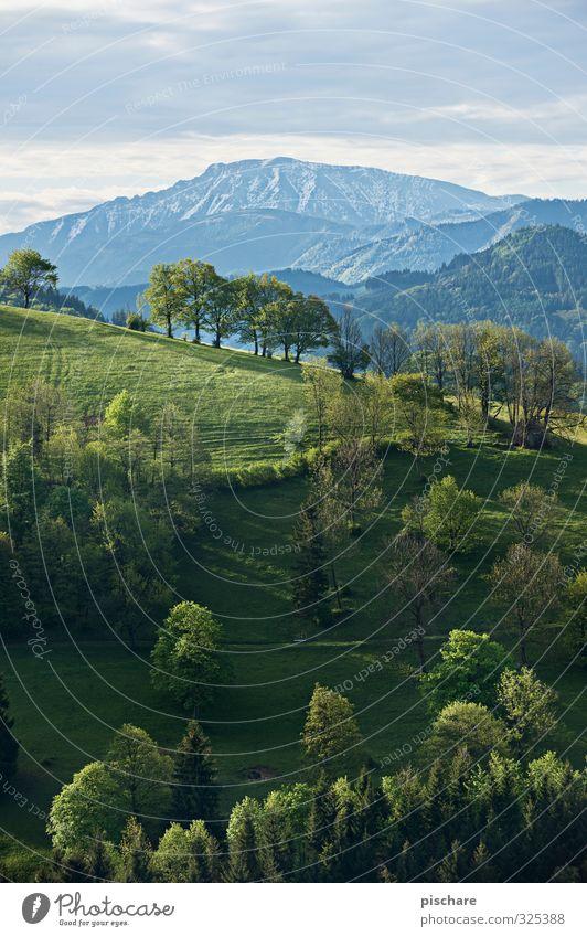 Der Ötscher Natur schön Baum Landschaft Wald Berge u. Gebirge Wiese Gipfel Hügel Schneebedeckte Gipfel Österreich Mostviertel