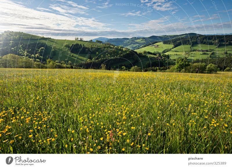 Sommerwiese Natur schön Blume Landschaft Wiese Frühling frisch Schönes Wetter Hügel Löwenzahn Österreich Mostviertel