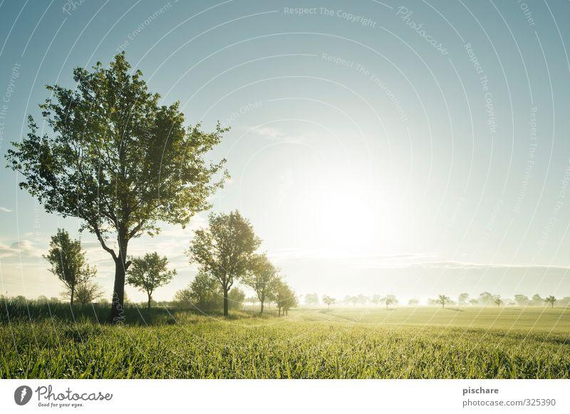 Ruhe Natur Landschaft Sonne Schönes Wetter Baum Gras Feld natürlich schön grün Mostviertel Österreich Farbfoto Außenaufnahme Morgendämmerung Sonnenlicht