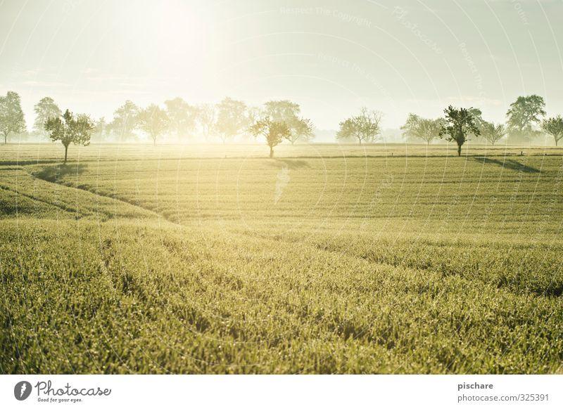 Früh morgens in Österreich Landschaft Sonne Baum Gras Feld schön Natur Mostviertel Nebel Farbfoto Außenaufnahme Menschenleer Morgen Licht Reflexion & Spiegelung
