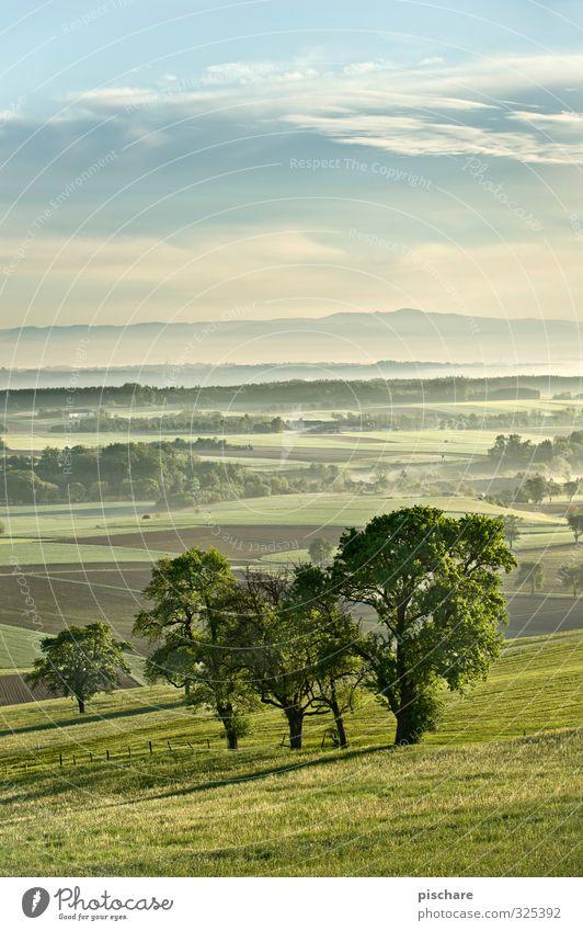 Am Land grün Baum Landschaft Wiese natürlich Feld Nebel Österreich Mostviertel