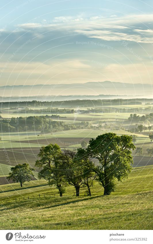 Am Land Landschaft Nebel Baum Wiese Feld natürlich grün Österreich Mostviertel Farbfoto Außenaufnahme Textfreiraum oben Morgendämmerung