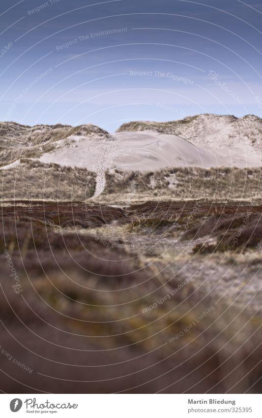 Dänemark Natur Landschaft Sand Himmel Klimawandel Pflanze Willensstärke Umwelt Dunes Farbfoto Außenaufnahme Menschenleer Textfreiraum oben Textfreiraum unten