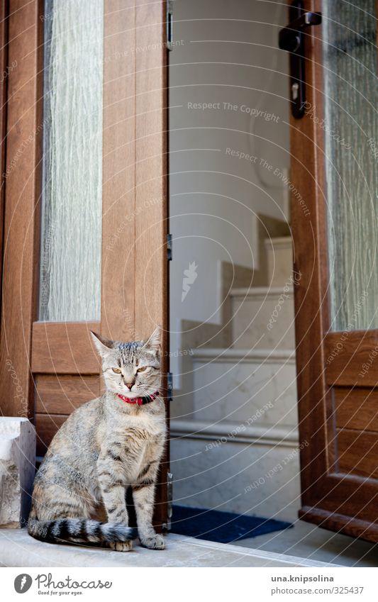wachkatze Katze Tier Haus Fenster natürlich Treppe Tür sitzen warten niedlich beobachten Freundlichkeit Wachsamkeit Haustier Tigerfellmuster