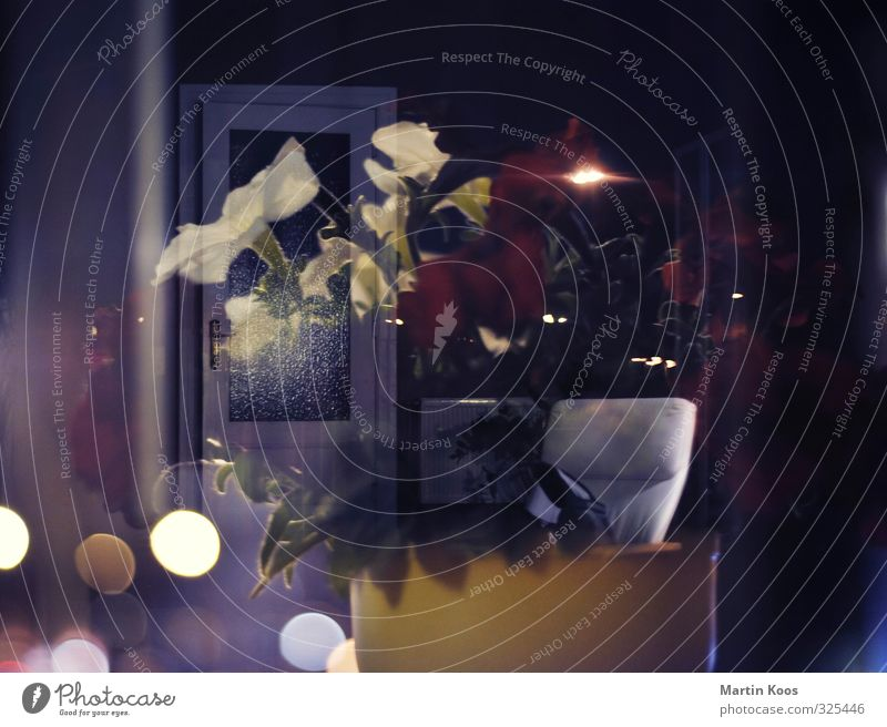 Blumentopf und Tür Doppellbelichtung Ferne dunkel Wärme Gefühle Lampe träumen glänzend Wachstum Dekoration & Verzierung Kreativität Energie geheimnisvoll Kerze