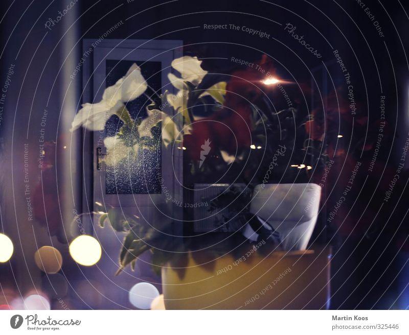 Blumentopf und Tür Doppellbelichtung Dekoration & Verzierung Kerze Kitsch Krimskrams dunkel glänzend Wärme Endzeitstimmung Energie Gefühle geheimnisvoll