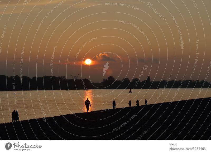 Sonnenuntergang an der Elbe mit Silhouetten von Menschen am Ufer Umwelt Natur Landschaft Pflanze Himmel Herbst Schönes Wetter Baum Flussufer Elbstrand Hamburg