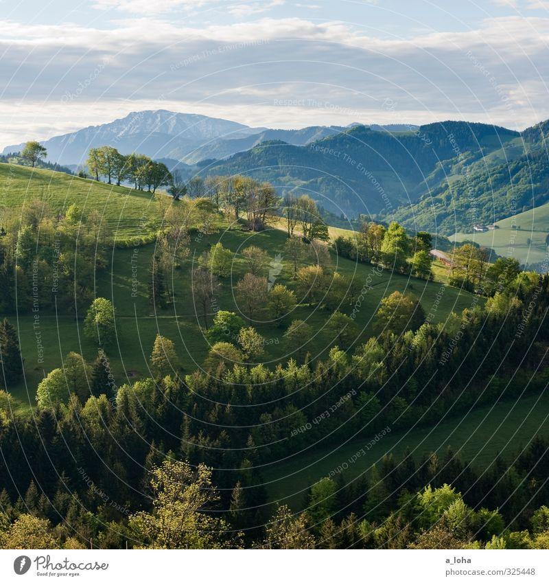 Der Schatz im Ötscher II Umwelt Natur Landschaft Pflanze Urelemente Himmel Wolken Horizont Frühling Klima Wetter Schönes Wetter Baum Gras Sträucher Nutzpflanze