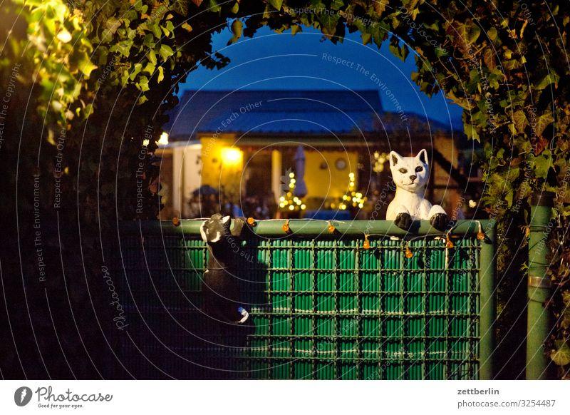 Schrebergarten mit Katzen Garten Kleingartenkolonie Menschenleer Natur Pflanze Sträucher Textfreiraum Tiefenschärfe Zweig Hecke Eingang Tür Tor Torbogen