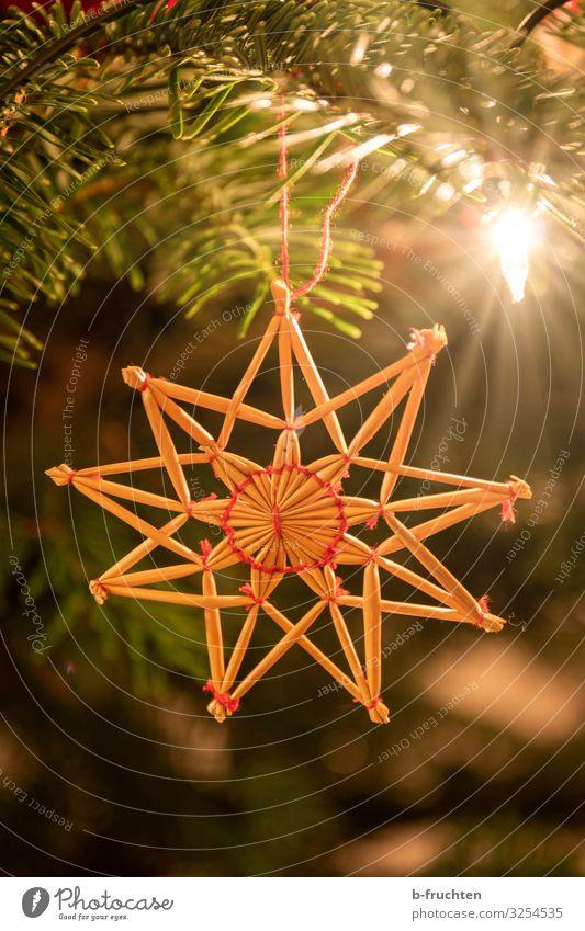 Strohstern auf Weihnachtsbaum Nachtleben Feste & Feiern Weihnachten & Advent Dekoration & Verzierung hängen Geborgenheit Religion & Glaube strohstern