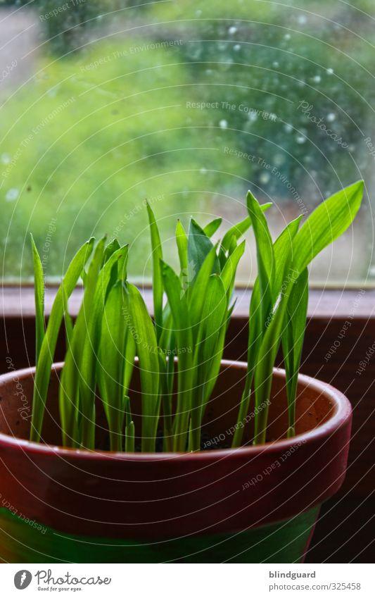 I Want Out Natur grün Pflanze schwarz Frühling Holz Autofenster Stein natürlich braun Glas Wachstum Landwirtschaft zart Forstwirtschaft Blumentopf