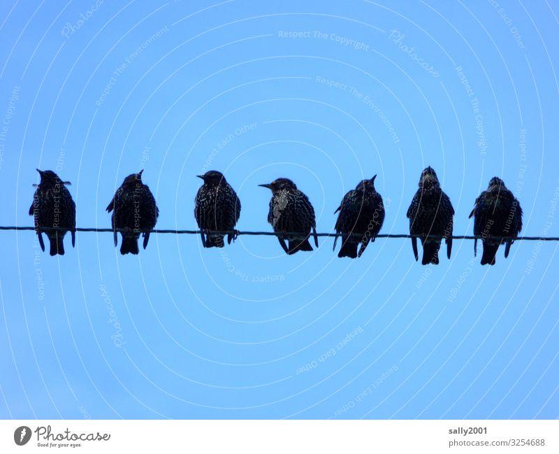 Starversammlung... Vogel Singvogel Gruppe sitzen versammeln Leitung Draht Stromleitung Kommunikation Himmel zwitschern singen Abstand nebeneinander schwarz