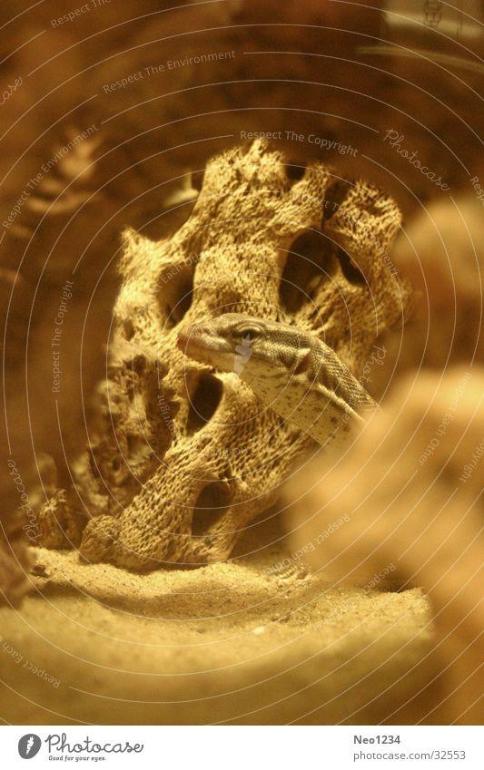 Jurassic Wärme Physik beige Echsen Terrarium