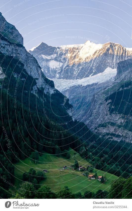 Schweizer Alpental im Morgenlicht Umwelt Natur Landschaft Sommer Berge u. Gebirge wandern Grindelwald Tal Chalet tief Baum Wald Kiefer alpin glühen Gletscher