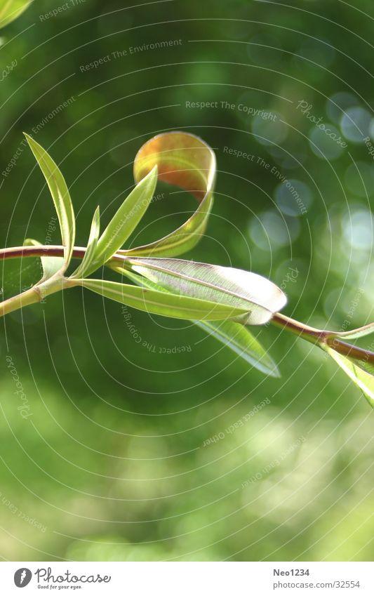 Natureleaves grün ruhig Blatt Zweig