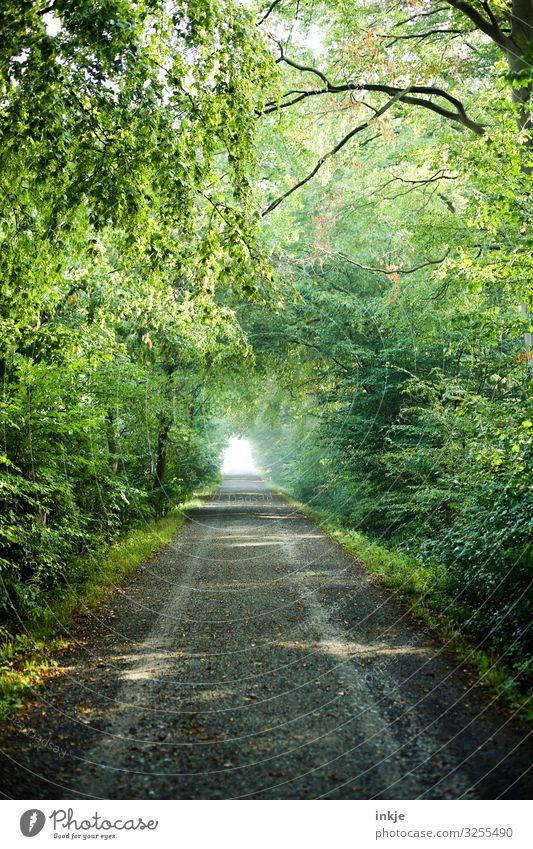 Waldweg Sommer Umwelt Natur Frühling Schönes Wetter Baum Sträucher Wege & Pfade Fußweg Spazierweg Ferne frisch hell grün Wachstum Tunneleffekt Farbfoto