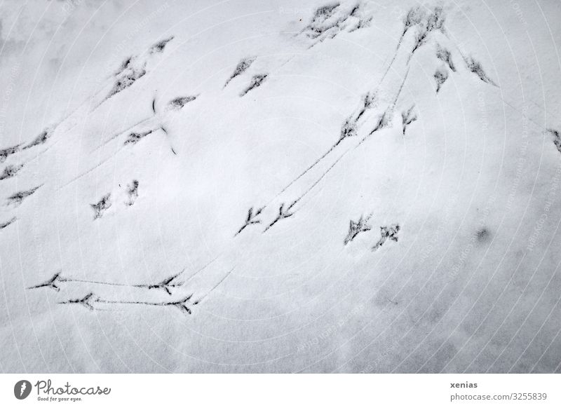 Vogelspuren im Schnee Winter Amsel kalt schwarz weiß Spuren spurenlesen Gedeckte Farben Außenaufnahme Nahaufnahme Detailaufnahme Textfreiraum unten